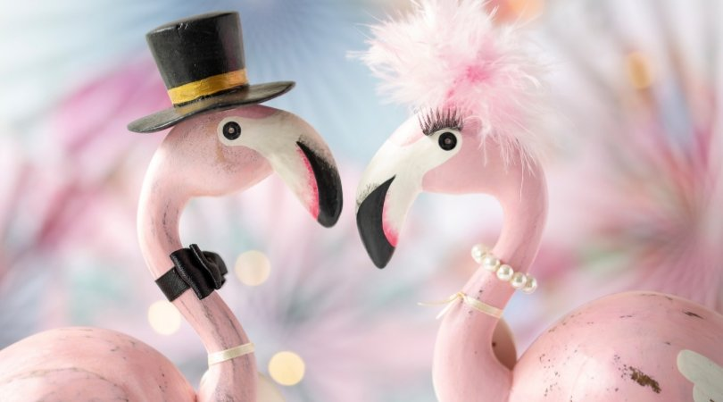 Flamboyant flamingo couple