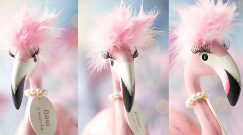 Sandra the flamboyant flamingo