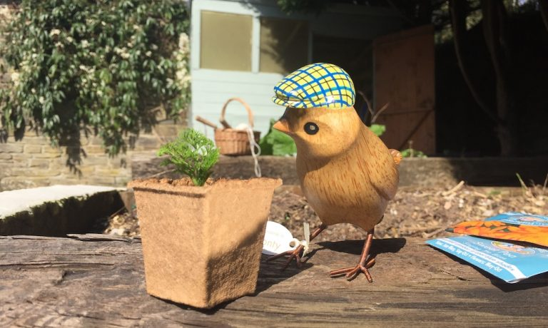 Plant a Seed with Dapper Garden Birds